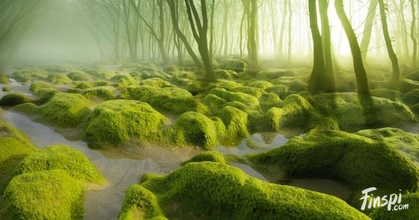 15-exquisitely-mystical-forests-which-will-enchant