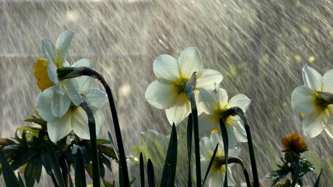 spring-rain-wallpaper-free