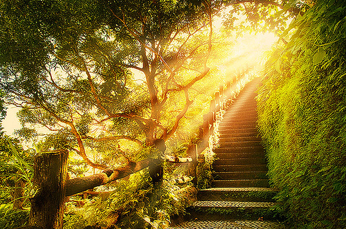 beautiful-green-heaven-light-nature-favim-com-138441