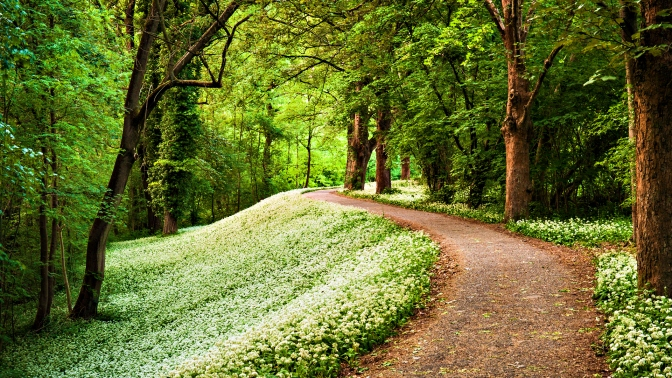 nature-green-path-in-forest-hd-wallpaper