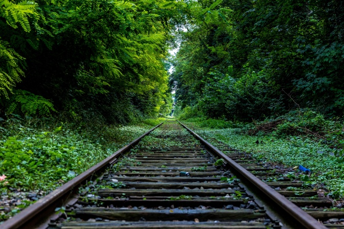 nature-forest-industry-rails